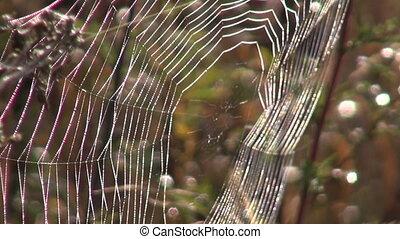 Spider web in the autumn - Spider web in the autumnal...