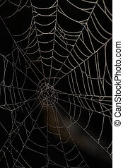 spider web in the dark. black background