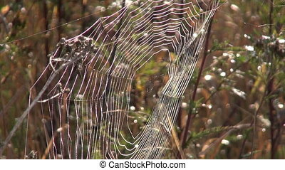 Spider web in the morning sun