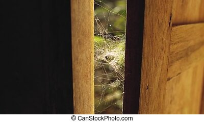 Spider web in the sun rays wooden windows - Natural nature...