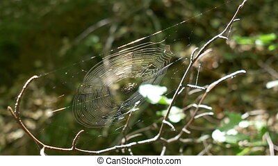 Spider Web in the Woods