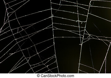 spider web on a black background