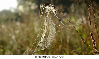 spider web on autumn grass and wind
