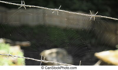 Spider web on barbed wire.