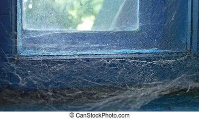 Spider Web on Old Window