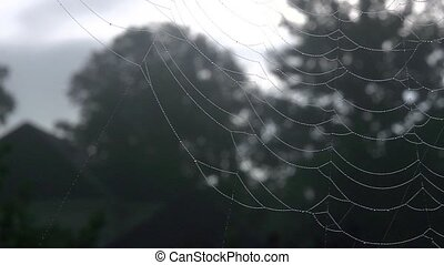 spider web pan - Pan of a he spider web.