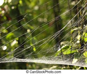 Spider web - probably a sheetweb spider, family Linyphiidae...
