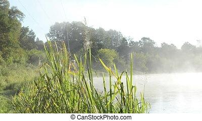 spider web river fog - spider web on misty fogy river shore ...