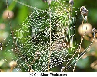 Spider Web - spider web