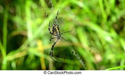 spider web wind