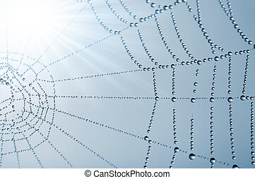 spider web with dew drops closeup