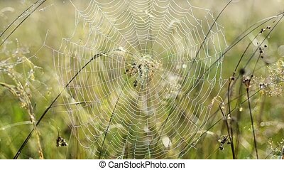 Spider web with dew - Close up of circle spider web with...