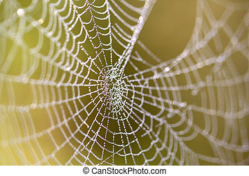 Spider web with drops