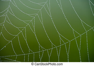 spider web with green
