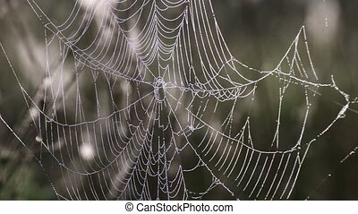 Spider web with morning dew hanging on the grass in the...