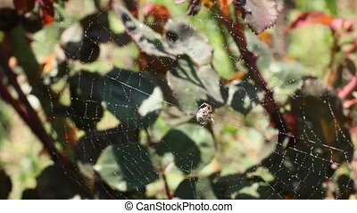 Spider web with spider on green background