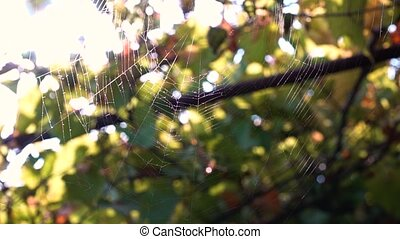 Spider web woven by a spider in the wind