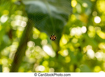 Spider webs on a yellow background green leaves.