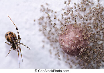 Spider with Big Family of Newborn Babies