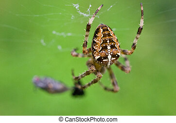 Spider with cross