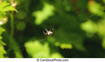 Spider working on its web among tree branches in the garden