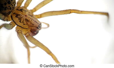 Spider,macro - Closeup macro of spider on white isolated...