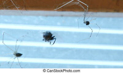 Spiders - Spider and Fly