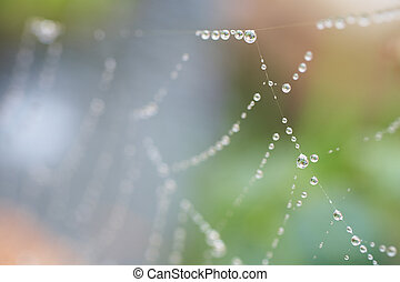 Spiders web - Water drops on a spiders web after early...