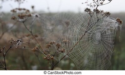 Spiderweb and dew, autumn - Spider web in the light of the...