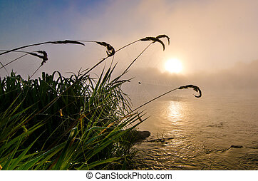 Spiderweb at colorful foggy dawn at the lake