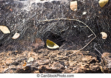 close-up of a spiderweb with shallow dof