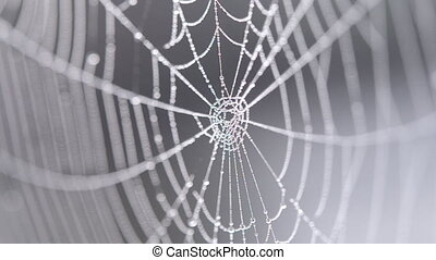 Spiderweb covered morning dew on summer morning close up. Spider web swaying in wind on gray blurred background. Dew drops on web close up. Cobweb hanging on metal old wire. Nature, natural background