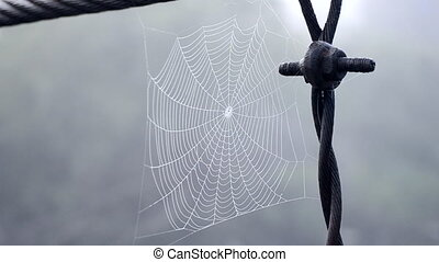 Spiderweb covered morning dew on summer morning close up. Spider web swaying in wind on gray background. Dew drops on web close up. Cobweb hanging on metal old rusty wire. Nature, natural background