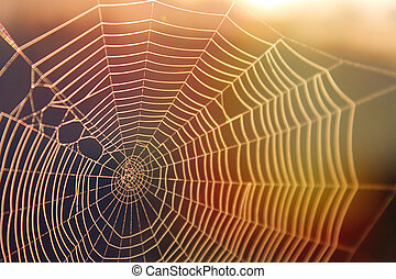 Spiderweb in the Sunshine with Colorful Rays of Light