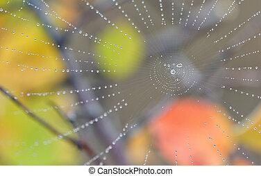 spiderweb, og, dug slipper, ind, skov