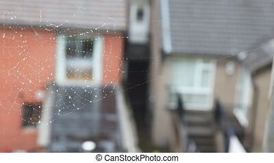 spiderweb on a very close shot, Irish houses on background -...