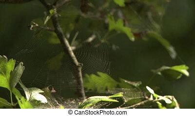 Spiderweb on Tree Limbs - Steady, medium close up shot of a...