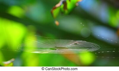 Spiderweb Spider Catching The Morning Breeze And Sunlight Bokeh Backgroung