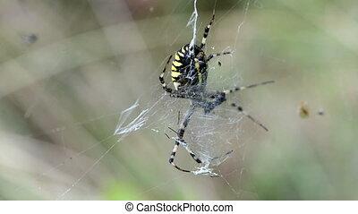 spiderweb spider wind