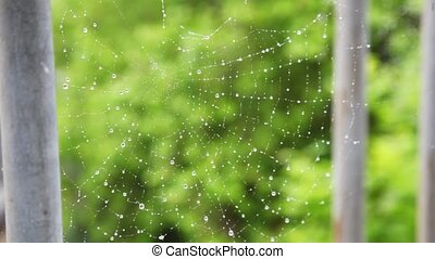 spiderweb with drops of water waving by wind on green...
