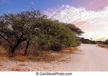 spiel, namibia, landschaftsbild, etosha, reserve