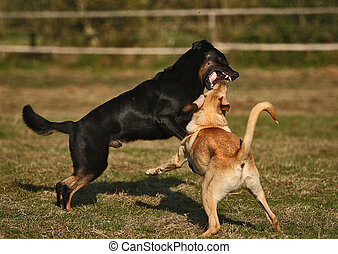 spielen, hund