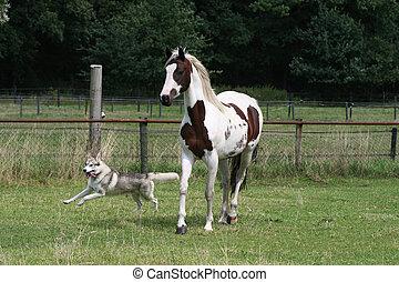 spielende , hund, und, pferd