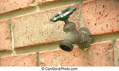 Spigot Leaking - Outdoor garden hose spigot protruding from...