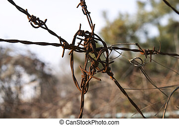 Spiked Wire - Rusted spiked wire