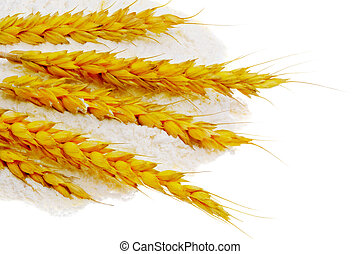 Spikelets of wheat on flour spillage. Isolated.