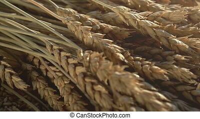 Spikes Grain and Flour