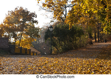 Spilberk Park in Brno - Autumn leaves on ground at Spilberk...