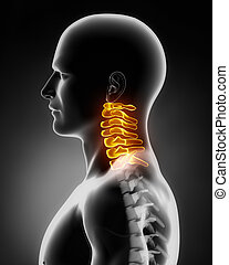 spina cervicale, anatomia, vista laterale