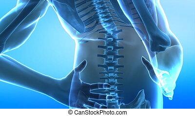 spina, closeup, umano